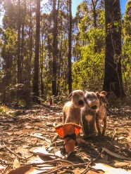 My bushwhacking adventurers, in the wilds of Australia.